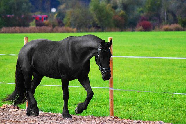 Jakie konie do agroturystyki?